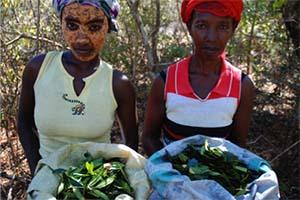 Aroma Forest Ladies1