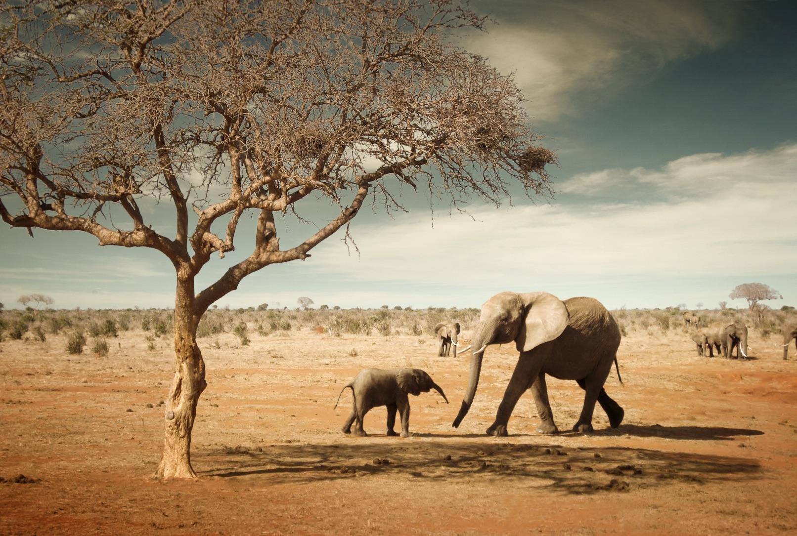 Elephants-Tree copy