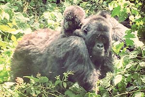 Humba Group Mother Child Virunga 2015-1