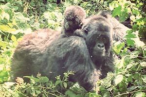 Humba Group Mother Child Virunga 2015-1
