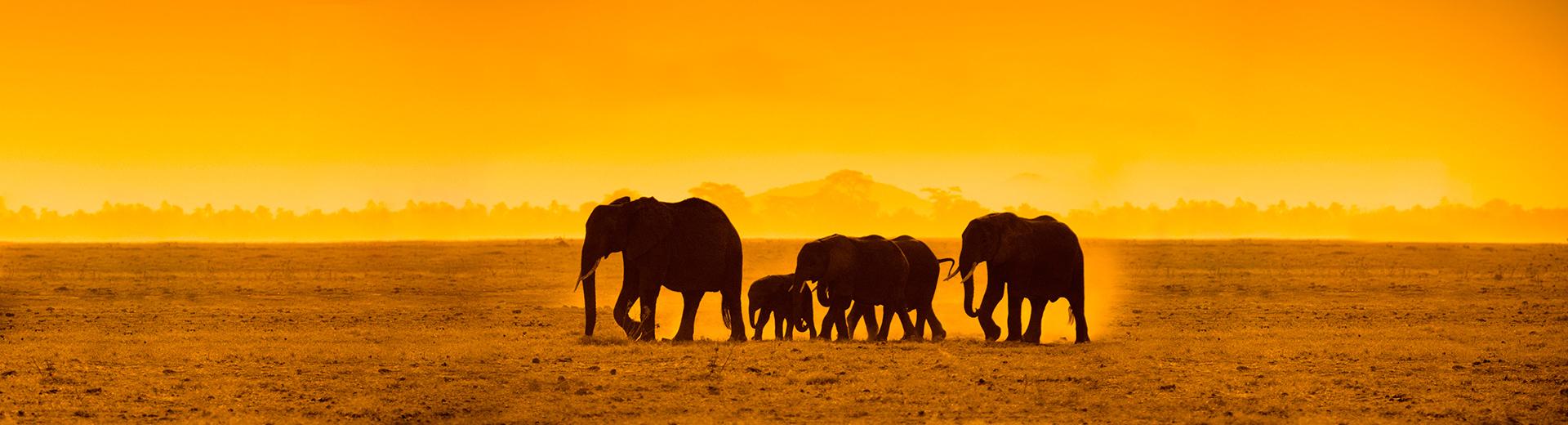 elephantsnotextedited