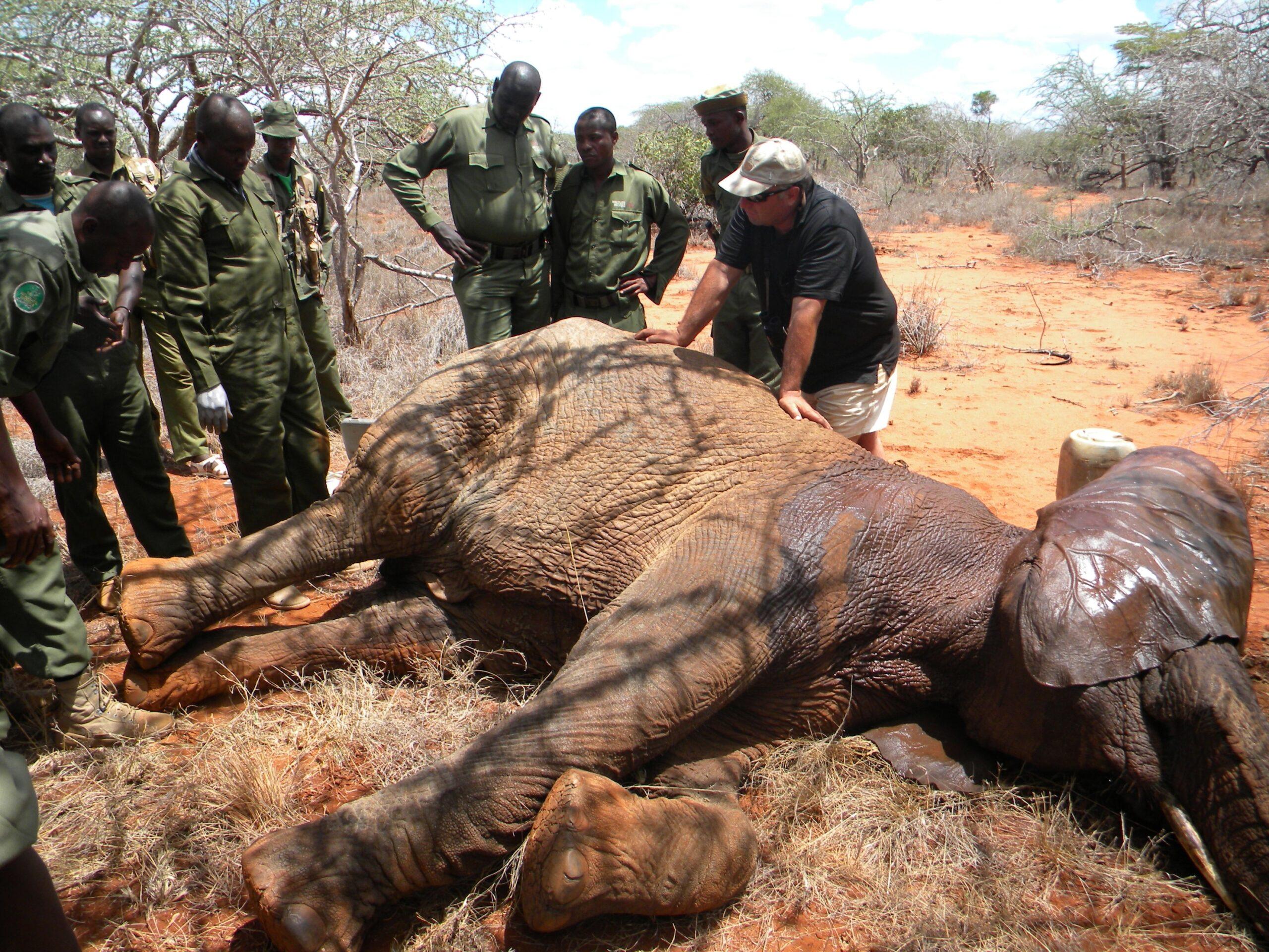 Rukinga Kenya / Wildlife Works