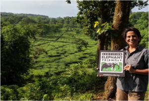 Nuxalbari Tea Estate owner Sonia Jabbar with the new Certified Elephant Friendly™ farm sign at her 1200 acre tea plantation. Photo credit: Nuxalbari Tea Estate